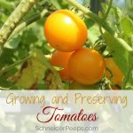 Tomatoes are probably the most popular homegrown vegetable. Homegrown tomatoes taste far better than store bought tomatoes, and they're pretty easy to grow. Growing and preserving tomatoes allows you to enjoy summer all year long.