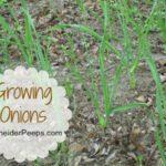 SchneiderPeeps: Growing Onions