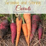 Growing carrots can sometimes be tricky but they are well worth the effort! Learn now to grow, harvest, and store carrots. Plus how to use the whole carrot, including the green carrot tops.