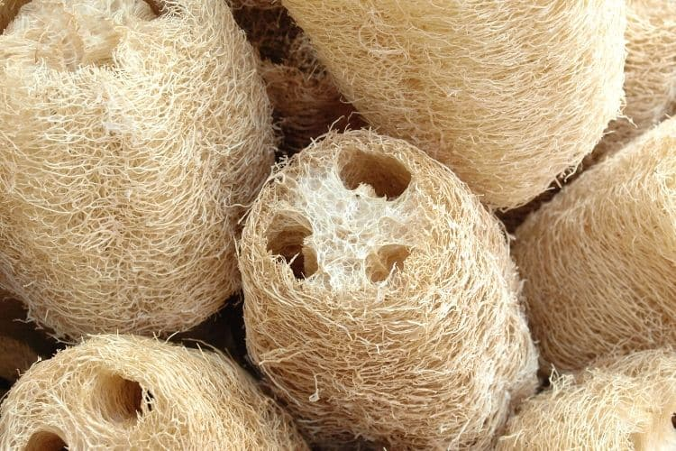 image of cleaned loofah