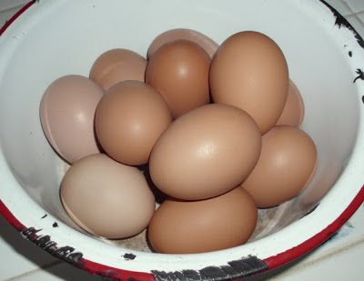 our first eggs
