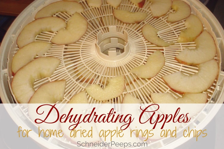 image of dehydrating apple slices