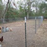 chicken yard