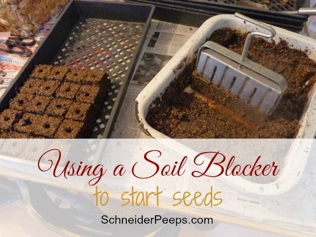 SchneiderPeeps - Starting seeds with soil blocker is a super frugal and easy way to start a lot of seeds at one time.