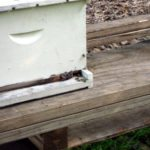 first bee hive