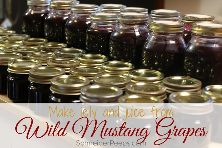 image of mustang grape jelly and mustang grape juice