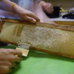 our first hive honey harvest