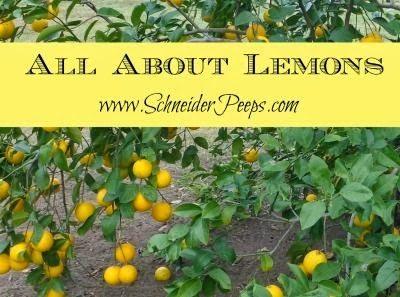 Lemons all about lemons