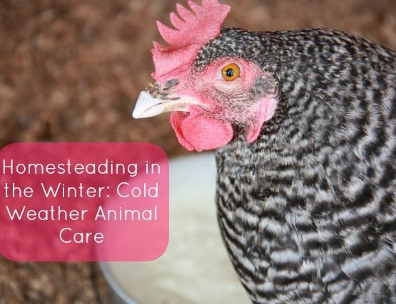 Cold Weather Animal Care