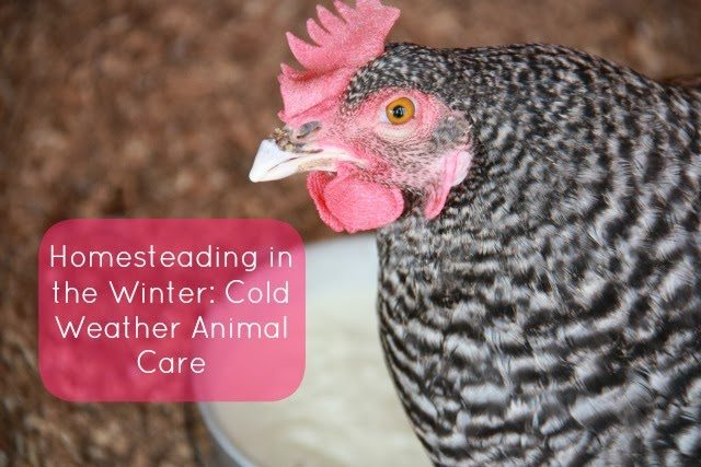 Cold Weather Animal Care - bloggers from all over