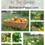 30+ Organic Techniques In the Garden