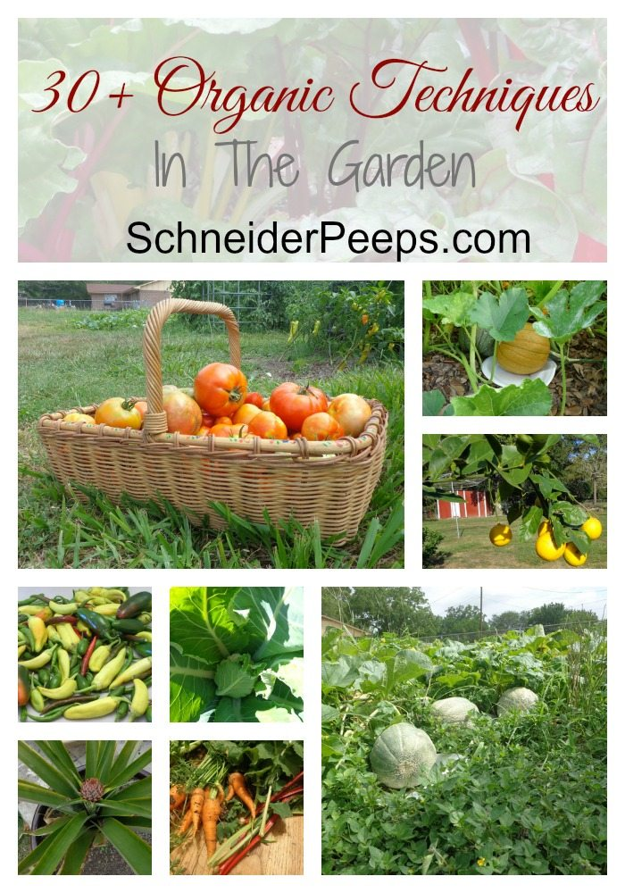 SchneiderPeeps - In the Garden