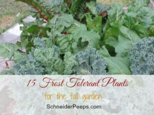 SchneiderPeeps - 15 Frost Tolerant Plants for Fall Garden