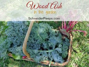 SchneiderPeeps - Wood Ash in the garden