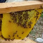 bees-spring update topbar hive