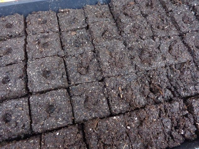 image of soil blocks for starting seeds