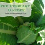 The February Garden Zone 9