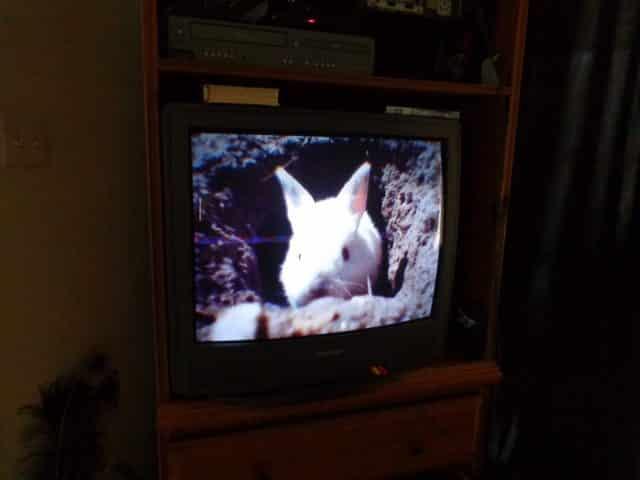 bunny cam