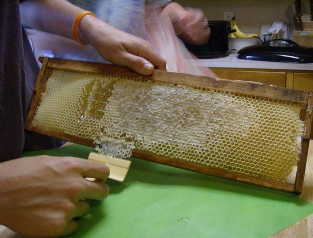 uncapping raw honey