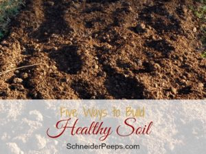 SchneiderPeeps - Healthy soil is the foundation of any garden. If you want a great garden, it starts with the soil. Here are five simple things to do to build your soil.