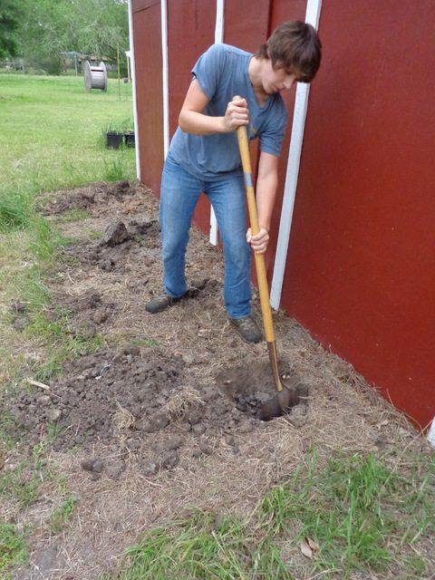Planting Moringa Trees
