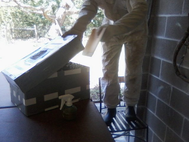 putting swarm of bees in a box