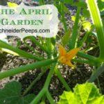 SchneiderPeeps The April Garden