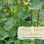 SchneiderPeeps - The May Garden