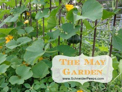 SchneiderPeeps - The May Garden