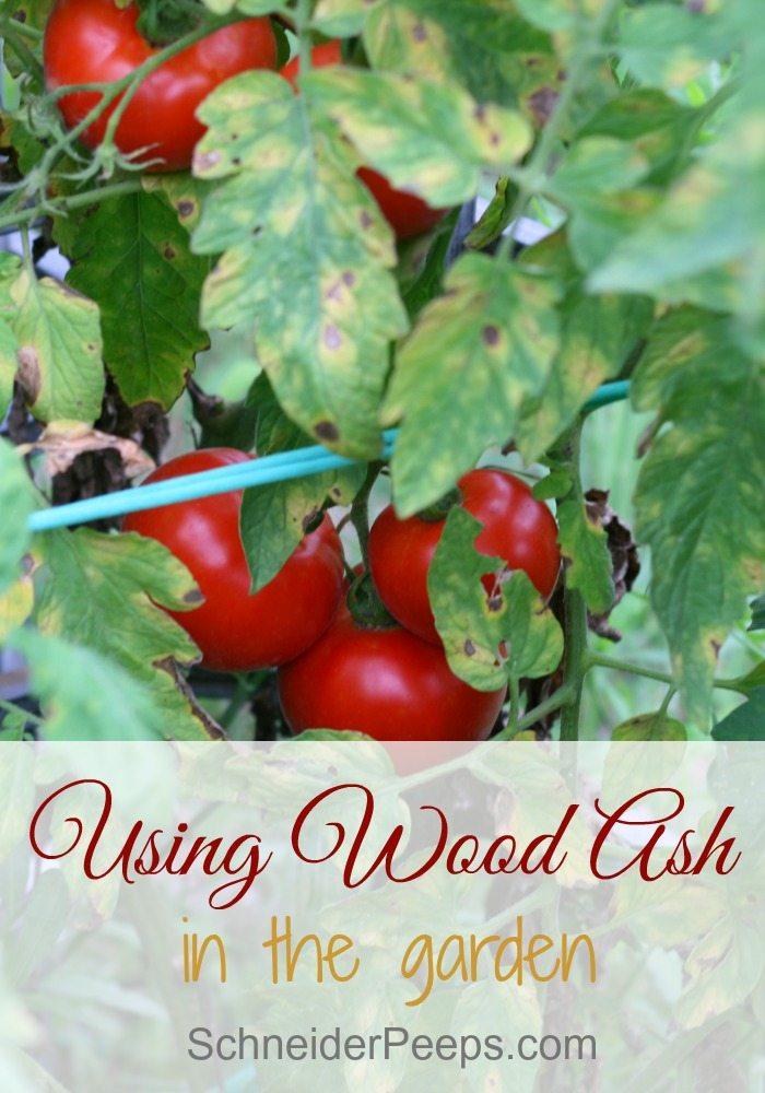 Using Wood Ash In The Garden Schneiderpeeps