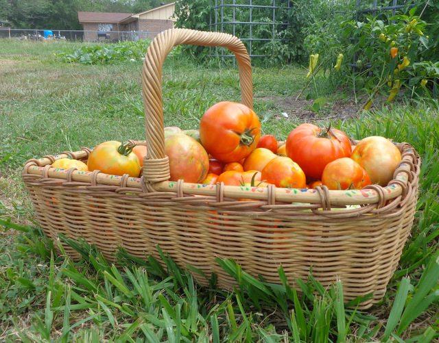 SchneiderPeeps - Tomatoes