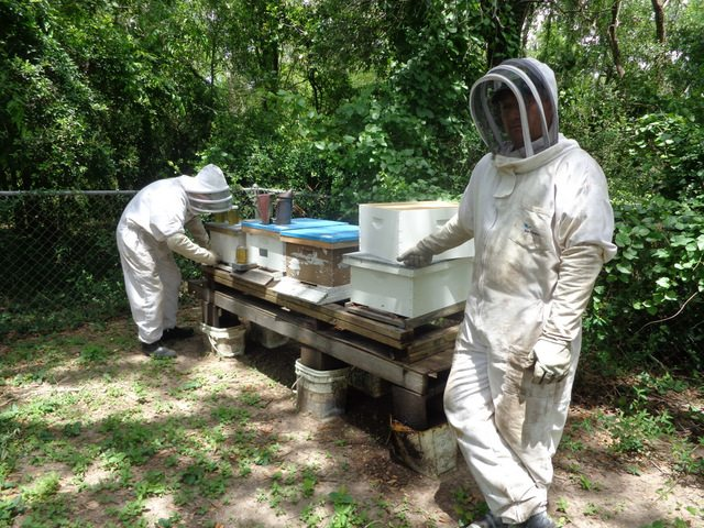 suited up for bees