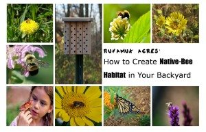 SchneiderPeeps - How to Create Native Bee Habitat in Your Backyard - book review