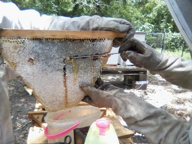 harvesting from topbar hive
