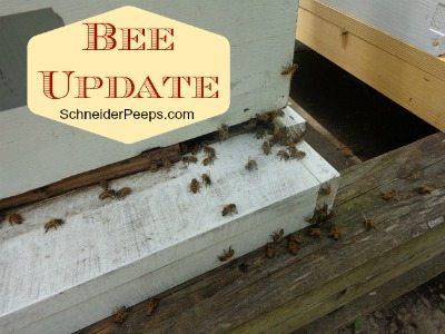 SchneiderPeeps - Bee Update
