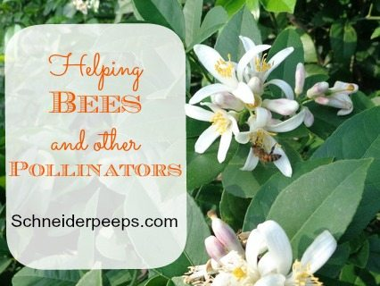 SchneiderPeeps - Helping Bees and Other Pollinators