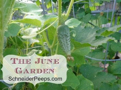 SchneiderPeeps - The June Garden