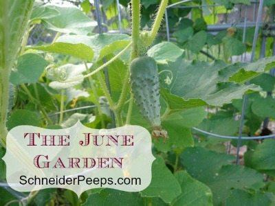 SchneiderPeeps - The June Garden