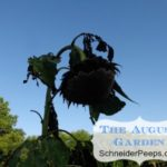 SchneiderPeeps - The August Garden