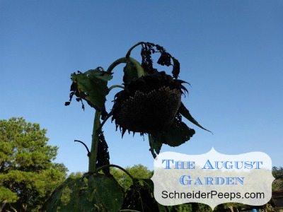 SchneiderPeeps - The August Garden