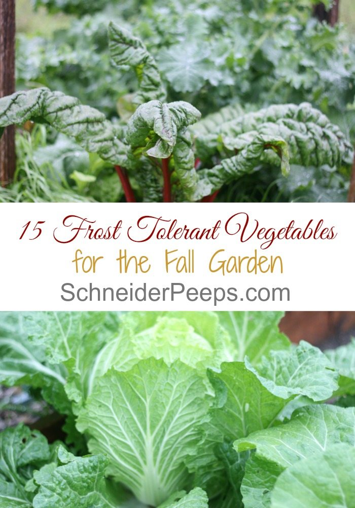 Just because it's cold doesn't mean gardening is over. Here is a list of 15 frost tolerant herbs and vegetables and how much cold they can take.
