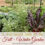 Just because it's cold doesn't mean gardening is over. Here is a list of 15 frost tolerant plants for the fall and winter vegetable garden plus growing tips.