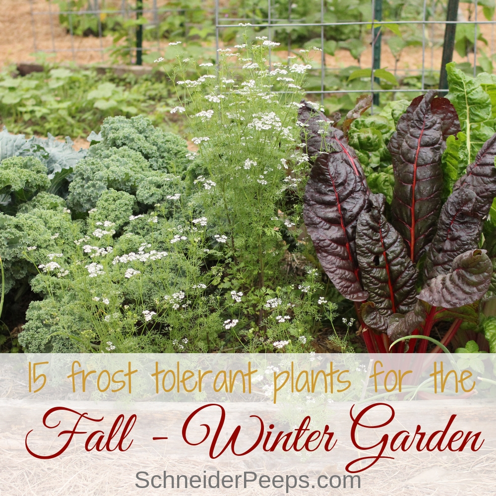 15 Frost Tolerant Plants For The Fall And Winter Vegetable