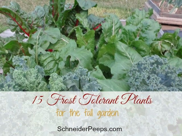 15 Frost Tolerant Vegetables to Grow in the Fall Garden | SchneiderPeeps
