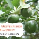 SchneiderPeeps - The September Garden