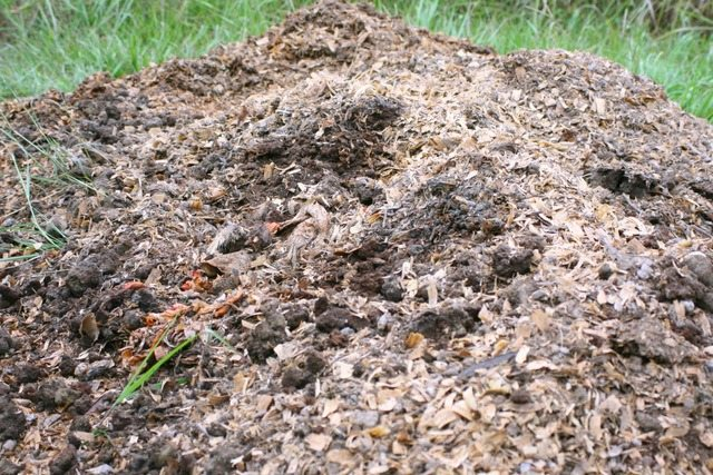 chicken bedding and coffee grounds