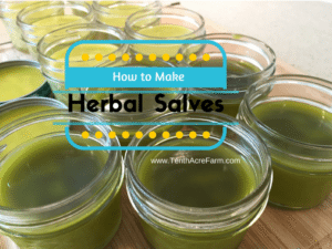 herbal-salves-800x600