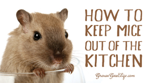 keep-mice-out-of-the-kitchen-horiz