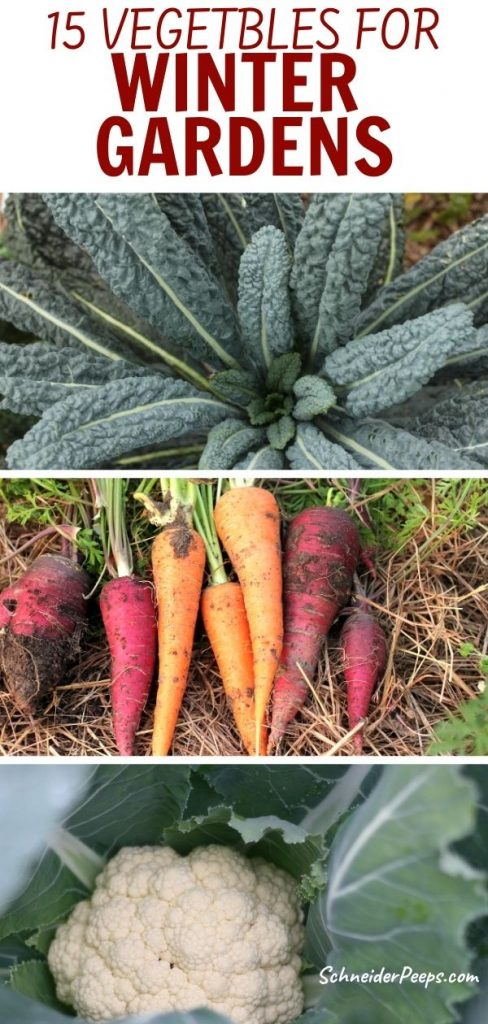 collage of winter vegetables to grow such as dinosaur kale, colorful carrots, and cauliflower
