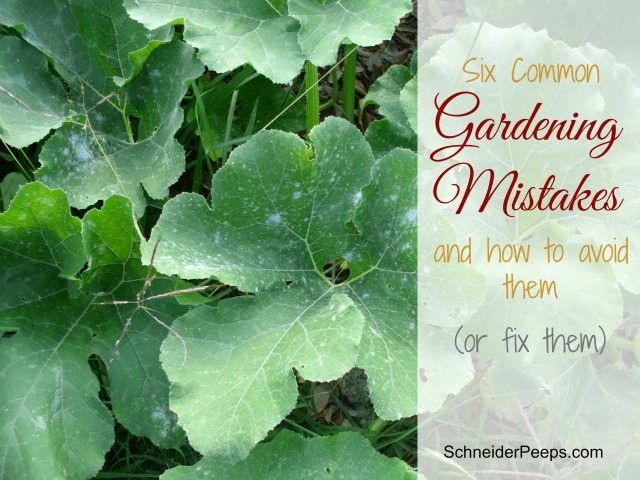 All gardeners make mistakes but that doesn't mean we have to keep making them. Here are 6 common gardening mistakes and how to avoid them or correct them.